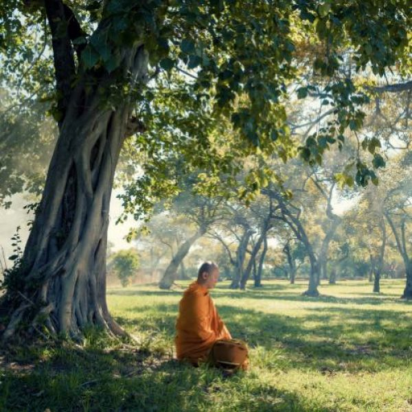 philosophie du yoga moine méditation arbre