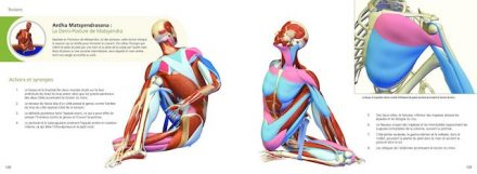 anatomie les postures de yoga