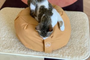 Le chaton Mozart allongé sur le zafu de méditation sable de la marque Yogom